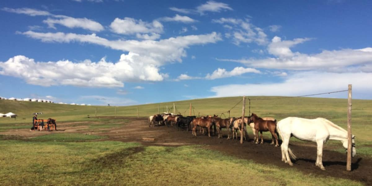 Horses In The Wild  - The Pavilions Mongolia