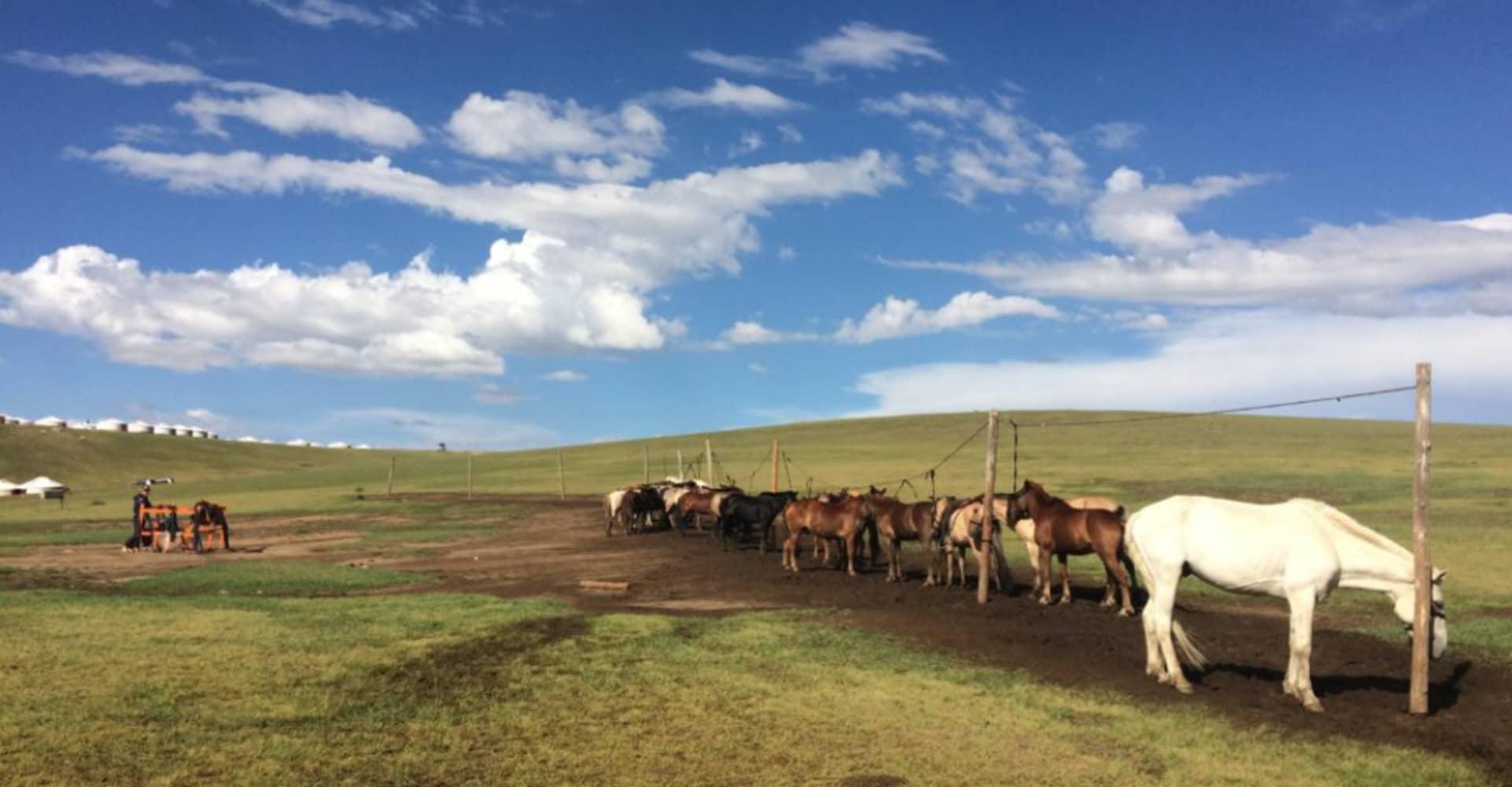 LOCATION - The Pavilions Mongolia