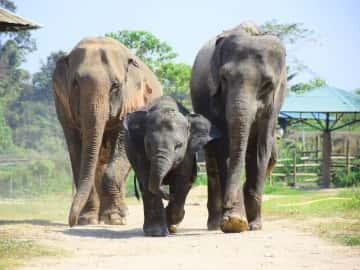 Unique Ecotourism Expedition - The Elephant Retirement Park