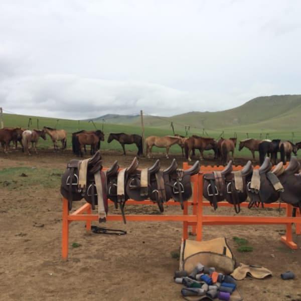 Horses area
