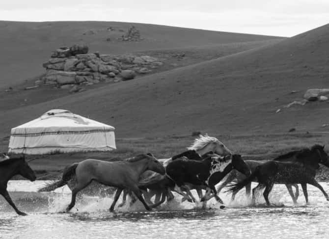 The Pavilions Mongolia