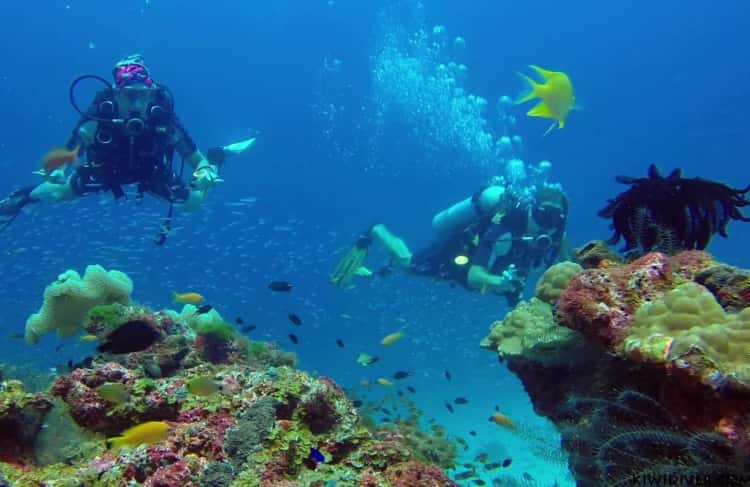Best Diving Sites in Phuket