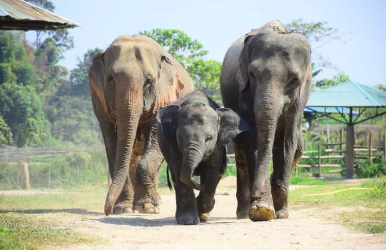 Unique Ecotourism Expedition - The Elephant Retirement Park